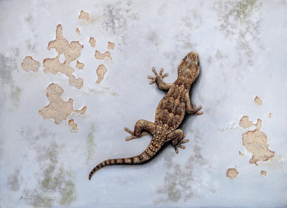 Gecko - Geco