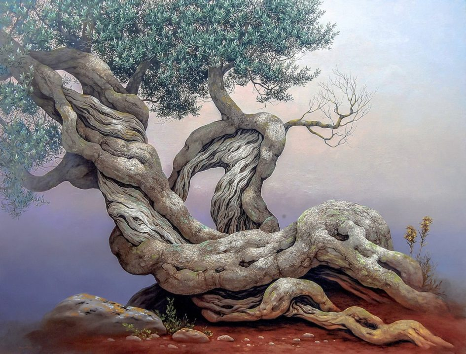 Olive Tree - Ulivo