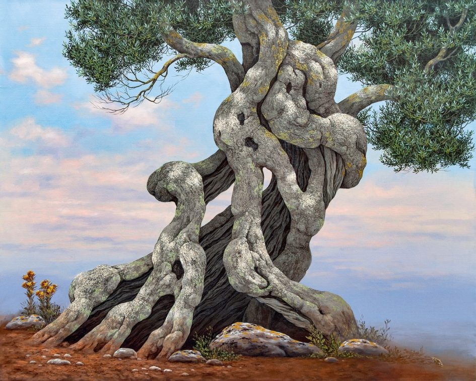 Olive Tree -Ulivo