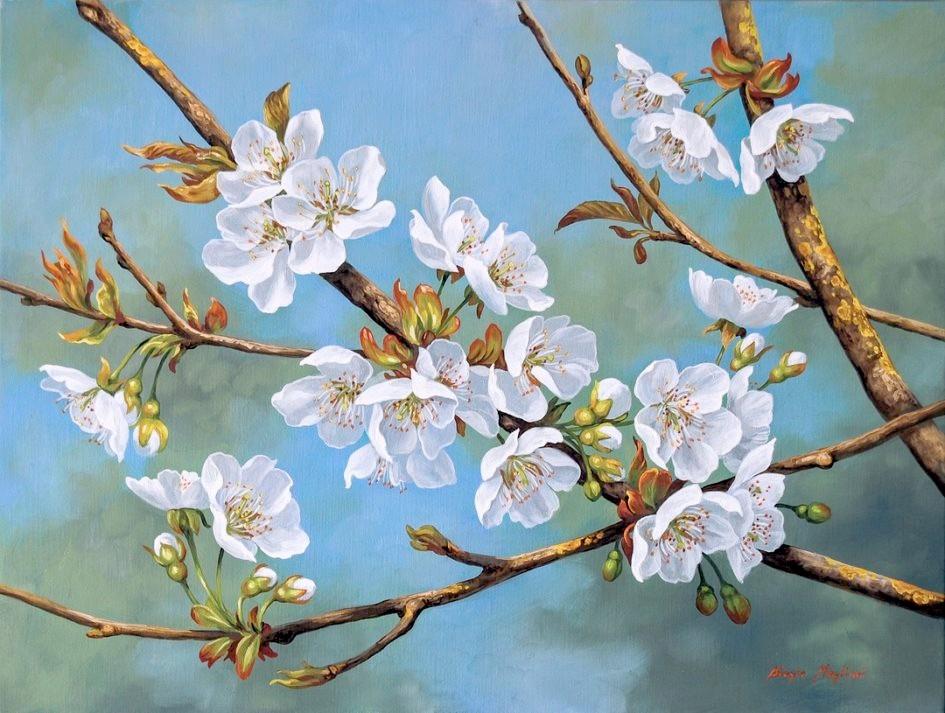 Cherry blossoms - Fiori di Ciliegio