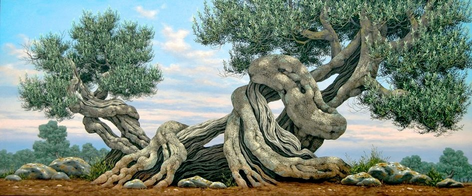 Olive Trees - Ulivi
