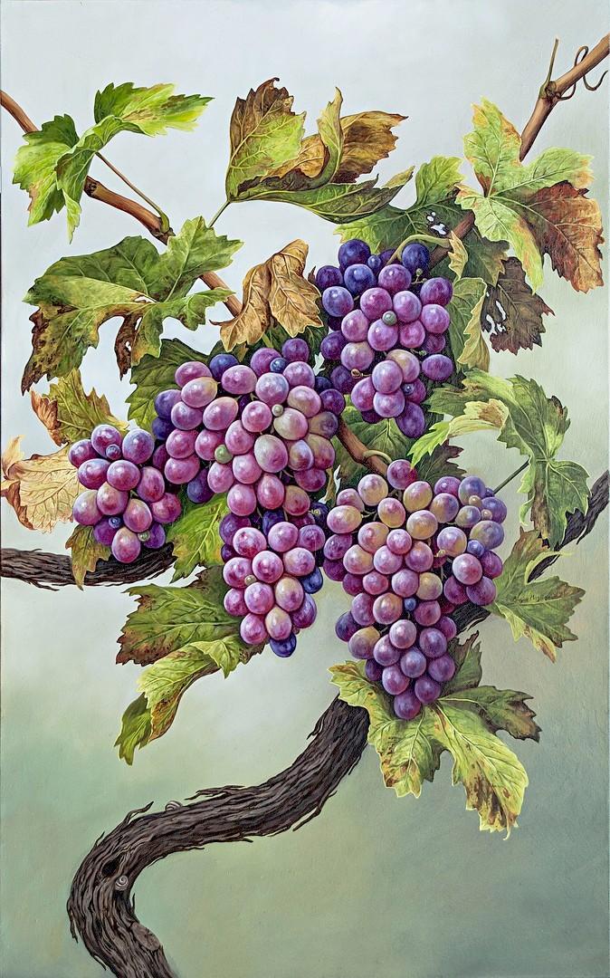 Grapes - Uva